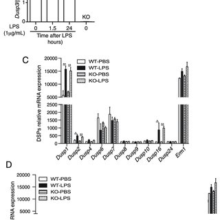 DUSP3 deficiency affects ERK1/2 phosphorylation, but not
