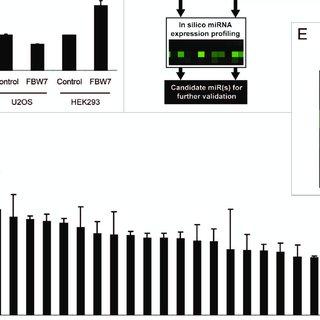 (PDF) MiRNA-27a controls FBW7/hCDC4-dependent cyclin E