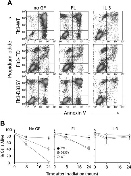 Expression of Flt3-D835Y and Flt3-ITD induces radiation