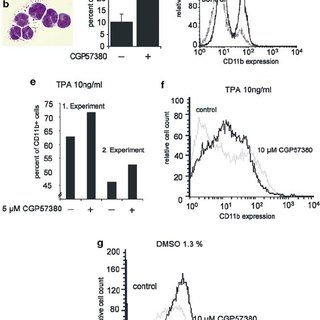 Regulation of MNK1 mRNA levels by AML fusion proteins. (a
