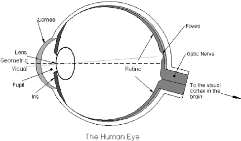 Schematic diagram of the cross-section through a human eye
