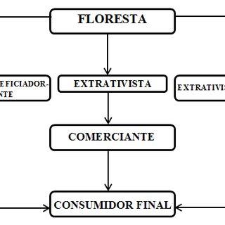 Fluxograma da cadeia produtiva do piquiá no município de