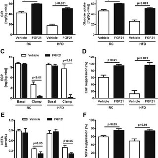FGF21 increases oxygen consumption in hepatocytes and