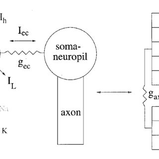 (PDF) Dynamics of two electrically coupled chaotic neurons