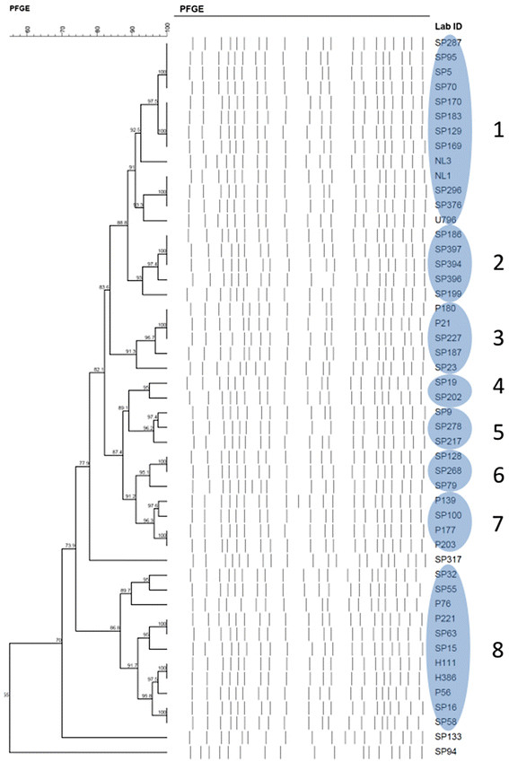 lab tree diagram mk3 vr6 wiring phylogenetic a blue oval shape denotes clonal group after applying similarity