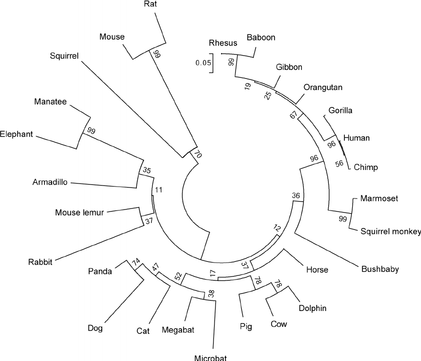 Neighbor-joining phylogenetic tree of genomic sequences