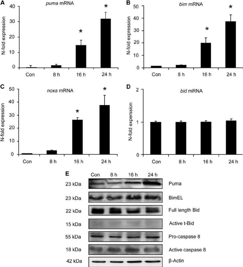 Determination of the transcriptional and posttranslational