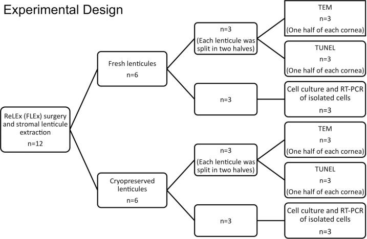 Flow diagram showing the experimental design. ReLEx