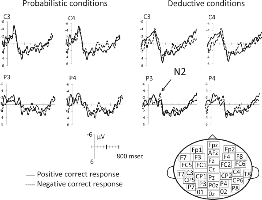 Morphology of the N2 component in probabilistic and