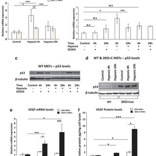 (PDF) P53 promotes VEGF expression and angiogenesis in the