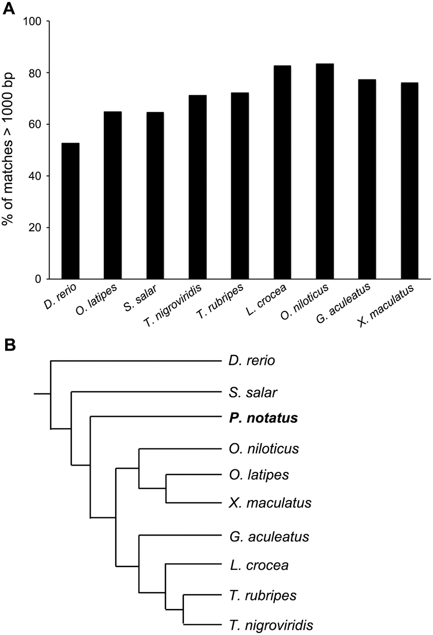 medium resolution of comparison of p notatus inner ear transcripts with other fish genomes a analysis