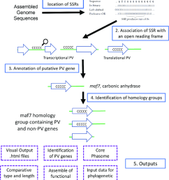 overview of the processes and outputs of phasomeit this flow diagram depicts the four major [ 850 x 971 Pixel ]