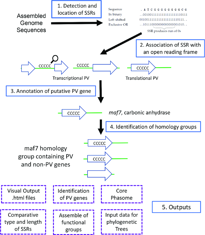 hight resolution of overview of the processes and outputs of phasomeit this flow diagram depicts the four major