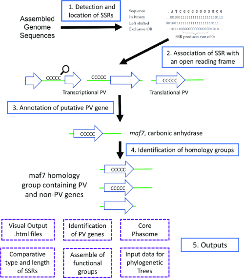 small resolution of overview of the processes and outputs of phasomeit this flow diagram depicts the four major