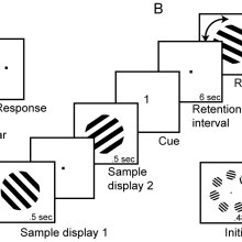 (PDF) Mental Imagery and Visual Working Memory