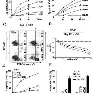 Activation of SAPK/JNK plays a functional role in Bay