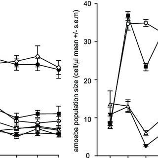Bacterial biomass dynamics (A) and amoebae population