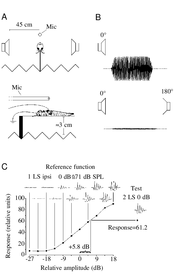 medium resolution of  a schematic drawing not to scale of the experimental arrangement mic microphone b oscillograms of an 8 khz stimulus recorded at the position of