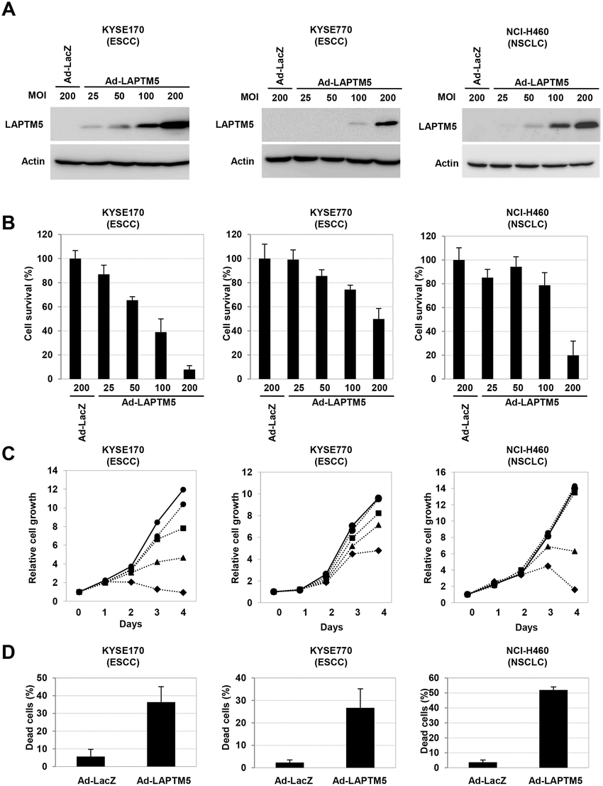 Overexpression of LAPTM5 induced cell death in cancer cell