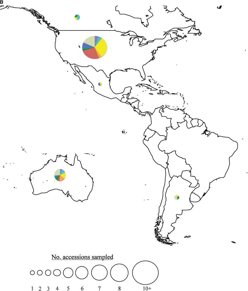 Fig. 2. Continued. saffl ower's presumed Near Eastern