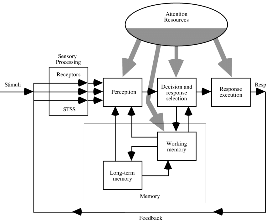 1. A model of human information processing showing the