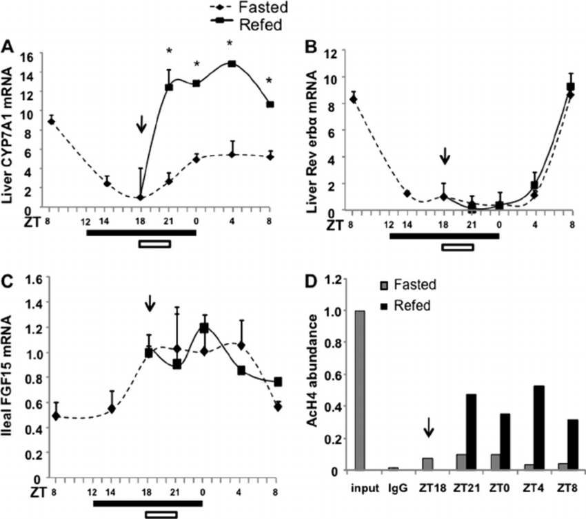 Nutrients control the circadian variations of cyp7a1 gene