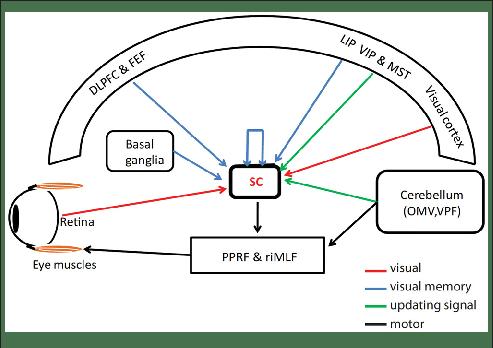 Red Cat Wiring Diagram RJ45 Termination Diagram Wiring