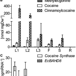 (PDF) The Last Step in Cocaine Biosynthesis Is Catalyzed