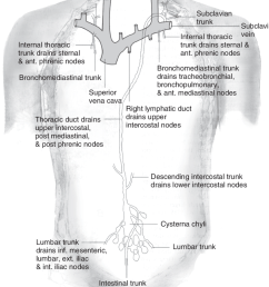10 human thoracoabdominal lymphatic system some high molecular weight download scientific diagram [ 850 x 1015 Pixel ]