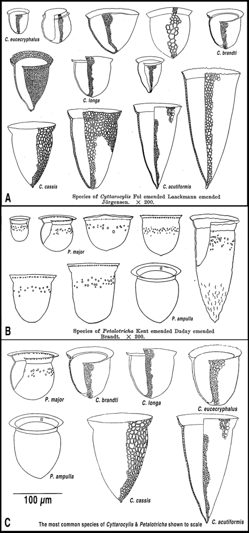 small resolution of the illustrations in kofoid and campbell 1929 of species of cyttarocylis a