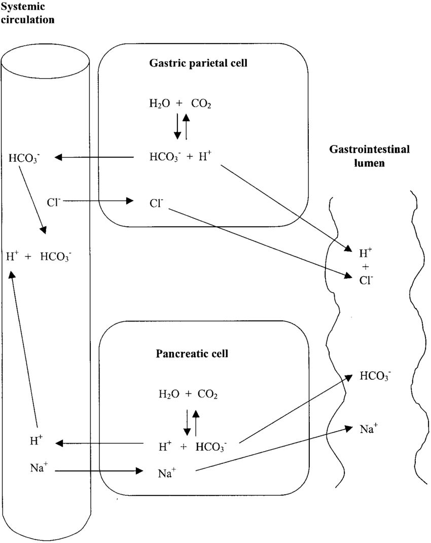 hight resolution of acid base regulation in the gastrointestinal tract