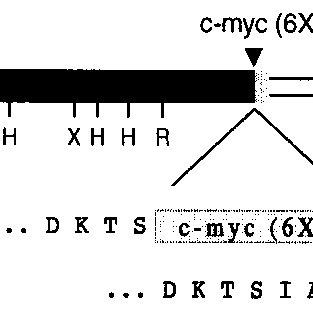 ERD1 import, binding, and fractionation using pea