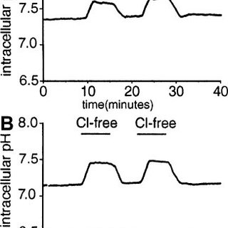 Effect of pH on 36 Cl uptake under voltage-clamp
