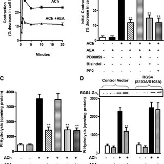 In gastric smooth muscle PAR2 receptors are coupled to Gq