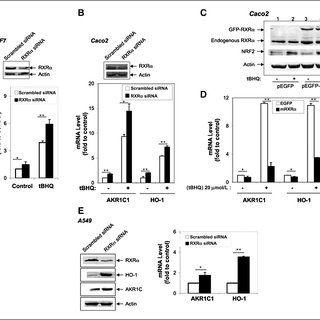 (PDF) RXRα inhibits the NRF2-ARE signaling pathway through