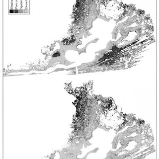(PDF) Mapping Disturbances in a Mangrove Forest Using