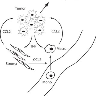 TNF induced CCL2 signaling is required for migration. a