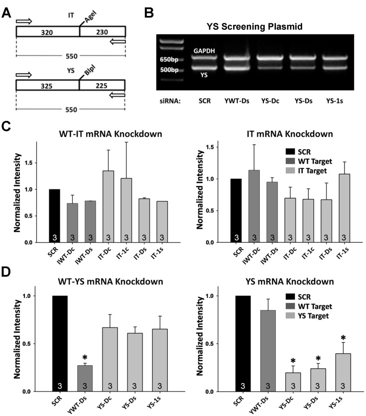 siRNA Screening Results at the RNA Level.