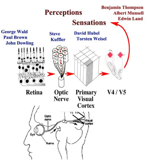 small resolution of a side view of the human visual pathway from the lens retina optic nerve