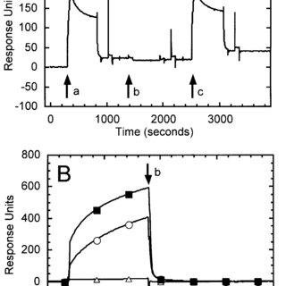 IL-8 mAb Western blots of example high-af fi nity Z9