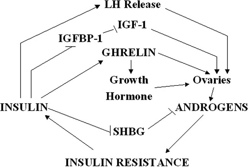 Relationship between insulin, ghrelin, androgens and