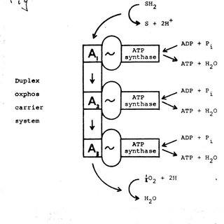 Mitchell's diagram for the conformational hypothesis. This