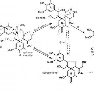 (a) Primary lignin monomers M , the monolignols. (b
