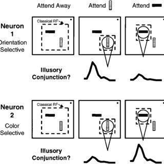 (PDF) The Role of Neural Mechanisms Review of Attention in