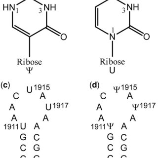 Local conformations of structural motifs involved in Ψ