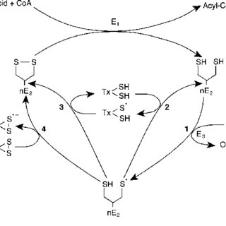 (PDF) Enzyme-Catalyzed Side Reactions with Molecular