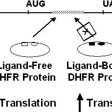 Enzyme reactions catalyzed by thymidylate synthase and