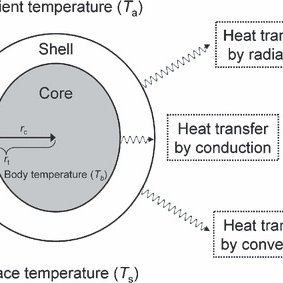 The core and shell model for heat transfer in an endotherm