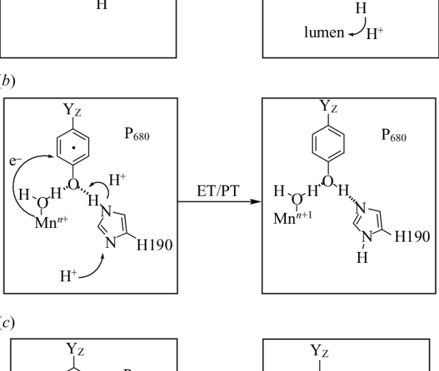 Models For Pcet Involved In A The Photooxidation Of Y Z And Bc The Subsequent Reduction Of Y Z In The Consecutive Pcet Mechanism B Electrons And