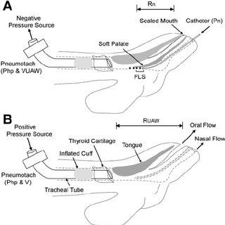 Upper Airway Diagram Swallowing Diagram Wiring Diagram